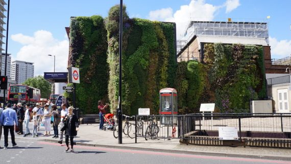 The Green Wall of Edgware Road